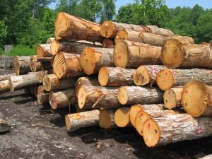 lumber_logs